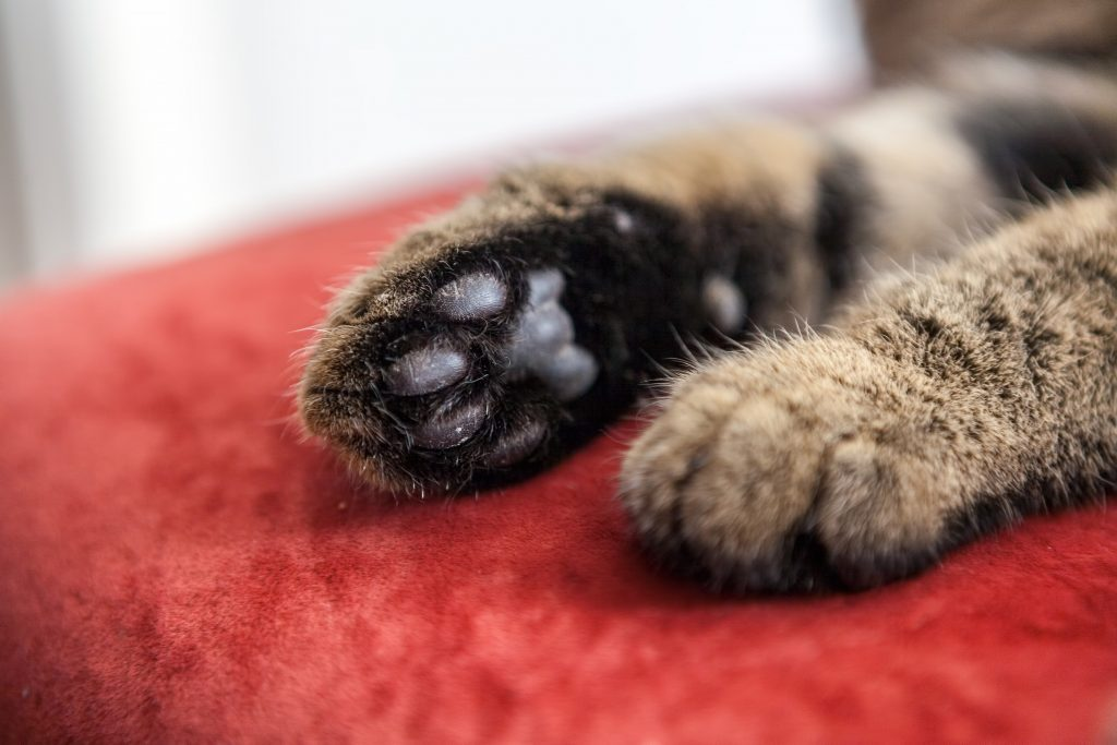 declawing-blog