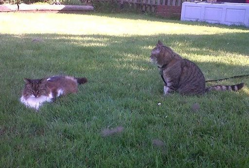 cats-senior