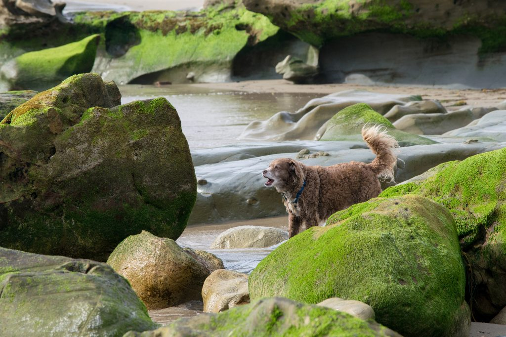 a dog stands in a moving river