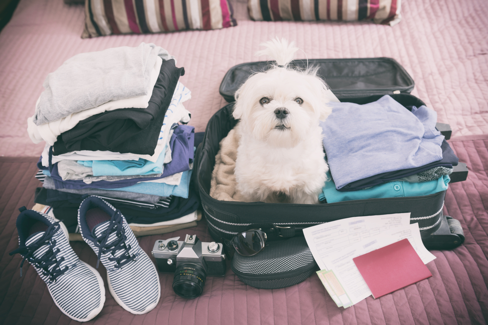 dog sitting in suitcase