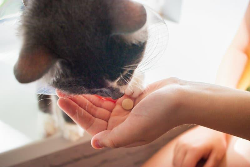cat smelling pills