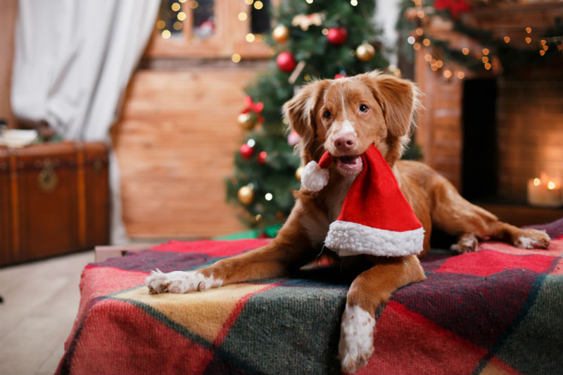 Best Holiday Gifts for Pets