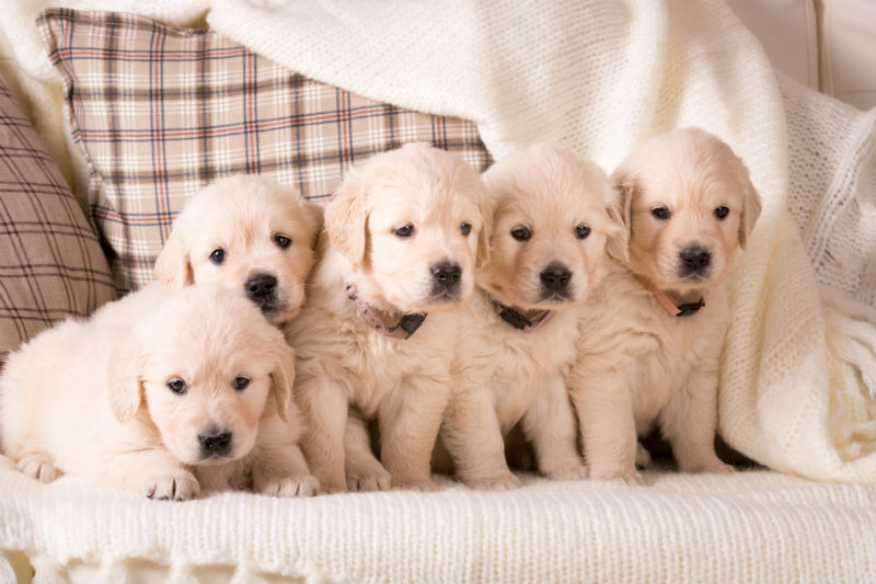 Socialization - The Key To A Puppy's Future
