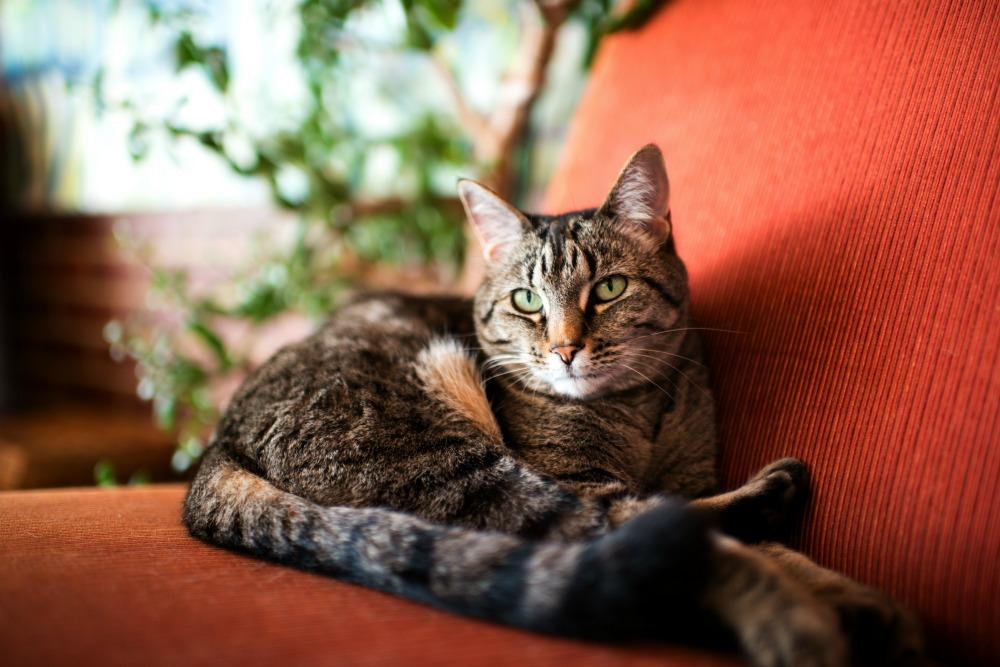 senior cat3