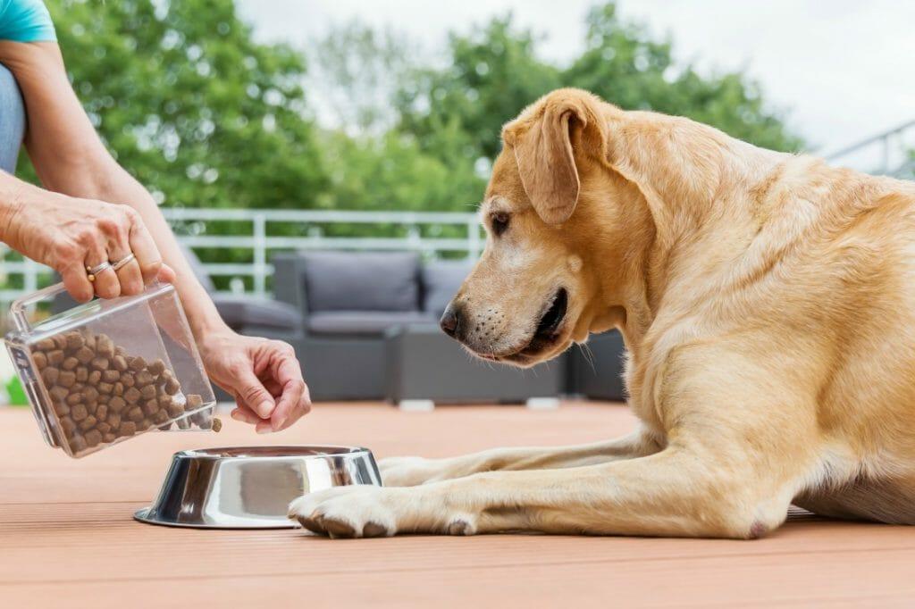 Owner feeding dog