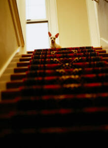 Dog looking down at the top of the stairs
